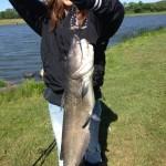 nice cat fish